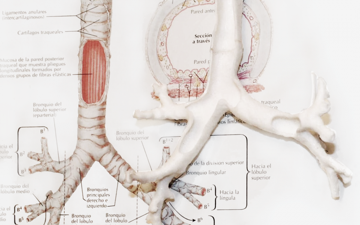 Neonatal airway anatomy